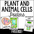 Plant and Animal Cells Science Poster and Vocabulary Cards.
